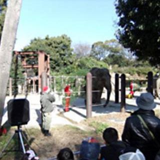 上野動物園で、動物たちにクリスマス...