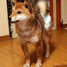 保護してます。迷い犬