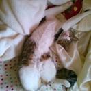 8ヶ月の甘えた猫ちゃん