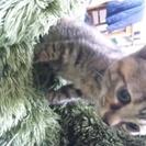 急募子猫の里親探してます