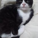 かわいい猫です。兄弟2匹です。保健所にはつれてきたくないです。
