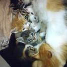 生後1ヶ月の子猫8匹