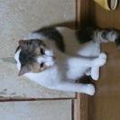 三毛猫です!