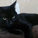 黒猫です!!