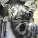 1ヶ月半の子猫ちゃんです!