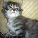 1ヶ月過ぎたくらいのオス猫ちゃん