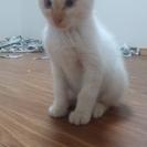 子猫が産まれました!里親さん募集中です!