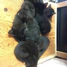 生後約2ヶ月の子猫の里親さん募集