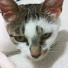 人が大好きなメス猫のナミちゃんの画像