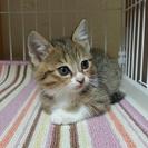 可愛い子猫の里親さん募集します!