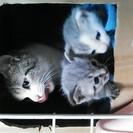 母猫と子猫保護しました。