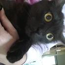 可愛い黒猫の女の子