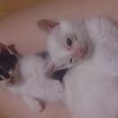 捨て子猫を保護しています!里親さん募集です!