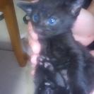 とっても甘えん坊で、キレイな青い目をした黒猫ちゃんの里親様募集です♪
