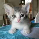 保護子猫の、里親さん募集します!