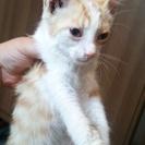 台風接近中で茶トラ子猫を緊急保護しました!