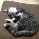 【急募】ネコちゃん♂(4ヶ月)の里親さん募集しています