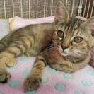 飼い猫から生まれた子猫の、里親さんを募集します!