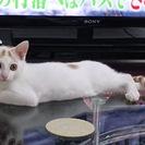 生後4ヶ月の人懐っこい子猫ちゃんです♪