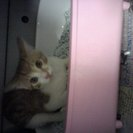 5月生まれの子猫