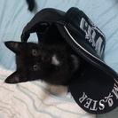 黒猫<メス>