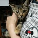 保護している子猫ちゃんの、里親様募集します!