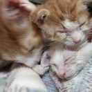 子猫二匹の里親募集中