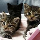子猫の里親さま、募集してます!
