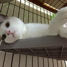 丸顔のかわいい仔猫の里親さん募集中