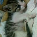 生後1ヶ月のかわいい子猫です♡の画像