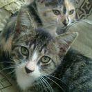 生後3ヶ月位の元気な子猫です♬