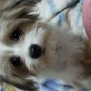 4ヶ月のMIX仔犬です