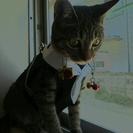 猫を愛する方、生き物に、優しい方、...