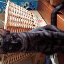 黒猫ライム=^・^=男の子