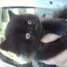 9月21日生まれの黒猫ちゃん