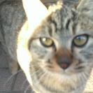 鳥栖市 3ヶ月くらいの子猫