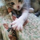 生後2~3ヶ月の仔猫です