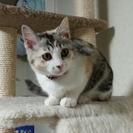 生後3ヶ月子猫の里親様を募集します!