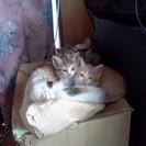 野良猫から生まれた子猫6匹を保護しています。