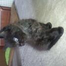 1ヶ月半になる黒猫ちゃんです