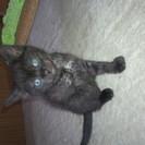 1ヶ月半になる黒っぽい毛の猫ちゃん