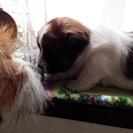 DOG SALON  Jack & Betty