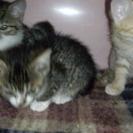 子猫4匹です。宜しくお願いします