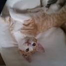 【成約となりました】人懐っこい子猫×4匹の里親さんを募集