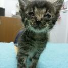 保護した子猫です。家族に迎えて下さい。