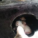 母親猫と子猫5匹まとめて引き取っていただける方