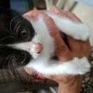 白×黒♀猫の赤ちゃん保護しました☆