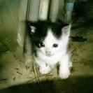 1ヶ月半の子猫です。