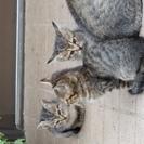 可愛く元気な仔猫たちです。