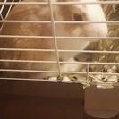 ミニウサギ4ヵ月です